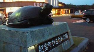 那智黒ウミガメ