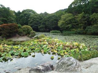 勧修寺-氷室の池