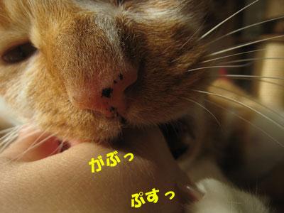 ちがうでしょーっ!!