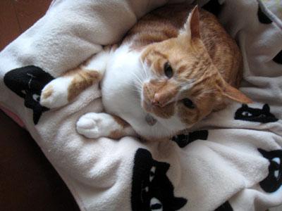 ねこまんじゅう毛布
