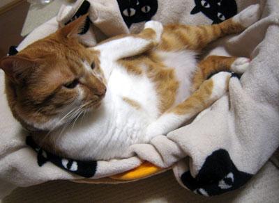 横たわるネコ