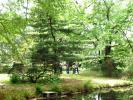 ラクウショウ付近の池