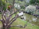 日本庭園サザンカ