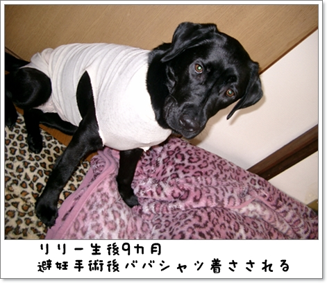 りりーババシャツ