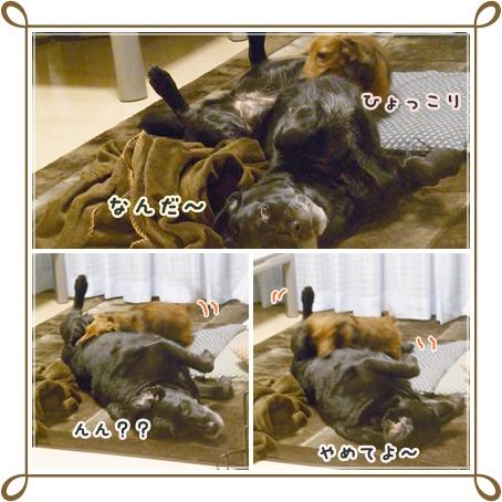 cats10214.jpg