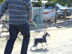 ママカット&お散歩