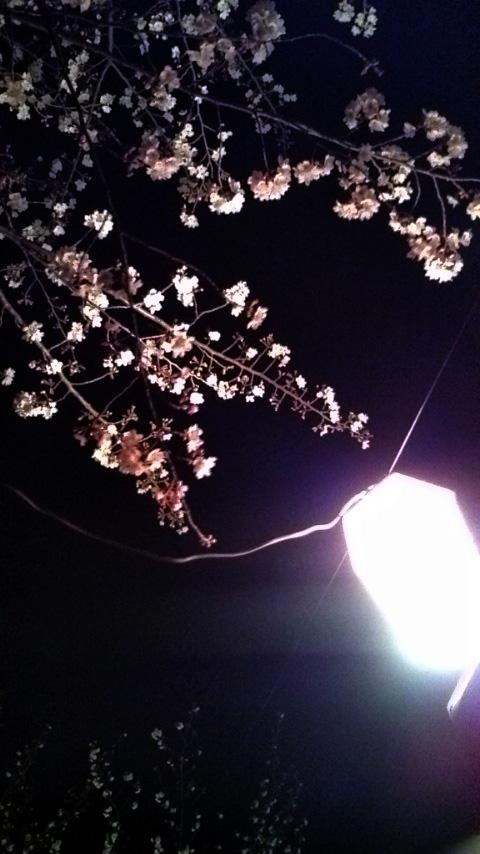 金曜に刈谷の亀城公園へ花見に行ってきました。寒かった~