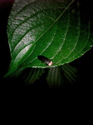 2011.06.06(月)矢指・追分市民の森(ホタル) 1