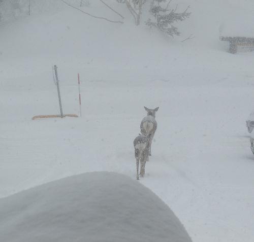 s-雪の中。。。