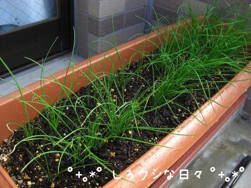 garden_02.jpg