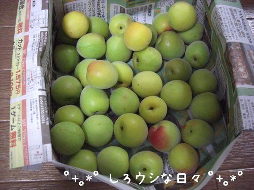 umeboshi_01.jpg