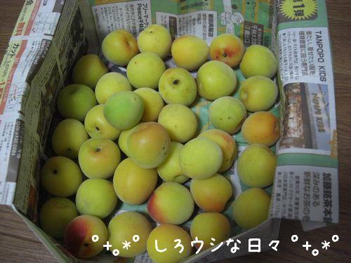 umeboshi_02.jpg