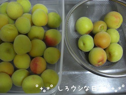 umeboshi_04.jpg