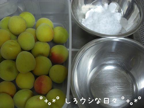 umeboshi_05.jpg