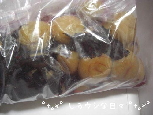 umeboshi_13.jpg