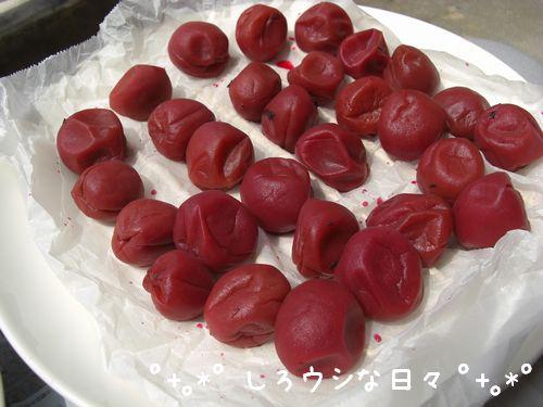 umeboshi_16.jpg