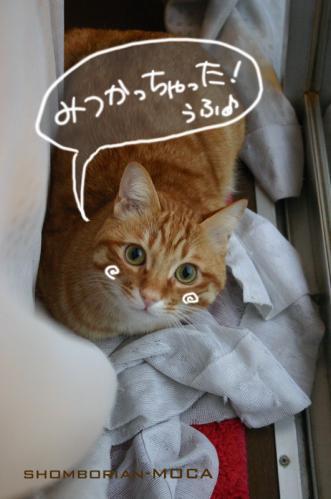 かわゆい(*´・ω・`*)