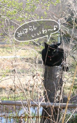 気配を消せる猫。