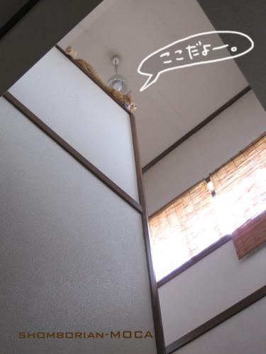 階段の吹き抜け~