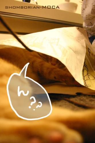 紙袋の中のモカ