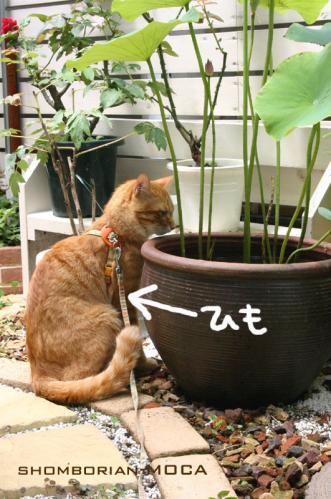 スイレン鉢を覗くモカ。