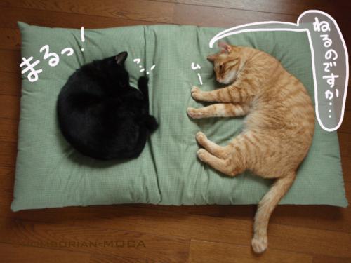 2匹とも眠いらしい。。。