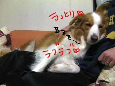 SANY0057.jpg