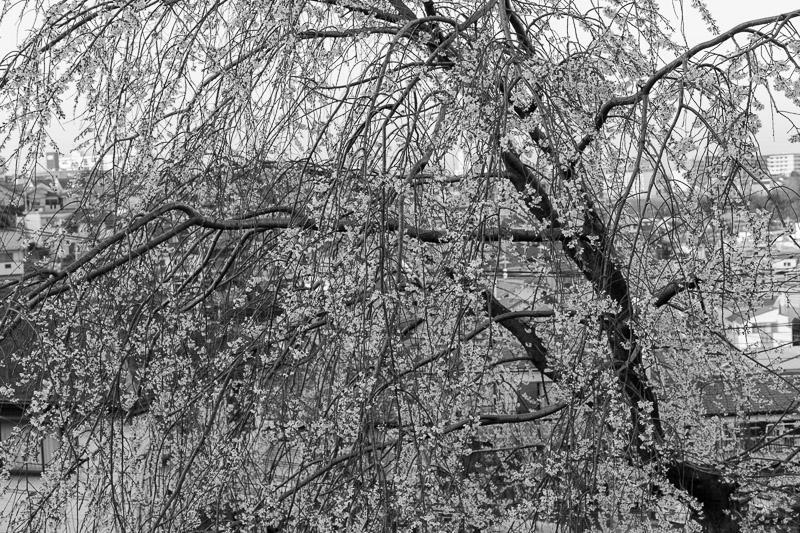2013-03-17_spring-1.jpg