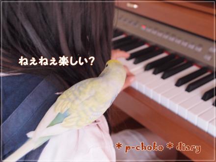 ピアノひかせて