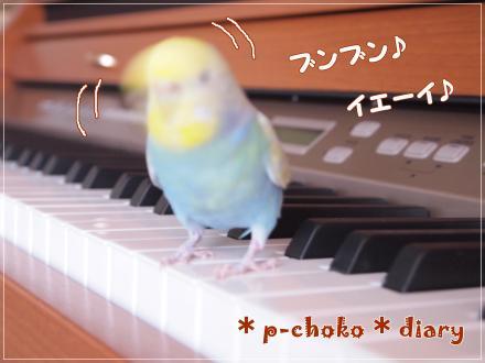 ピーちゃんピアノでノリノリ