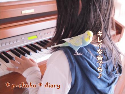 ピーちゃんピアノにうっとり