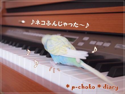 ピーちゃんピアノひいてみる