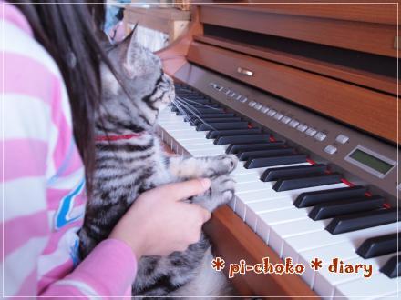 チョコたんピアノを弾かされる