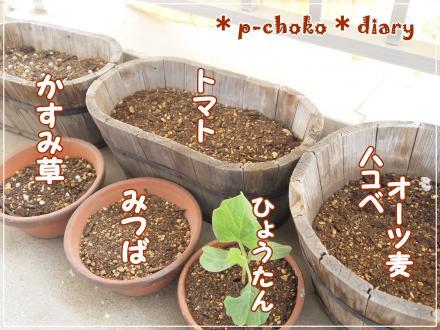 植えたもの全種