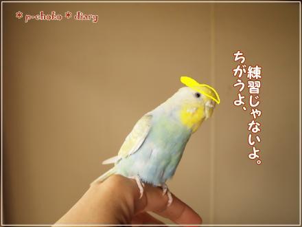 ピーちゃん黄色帽