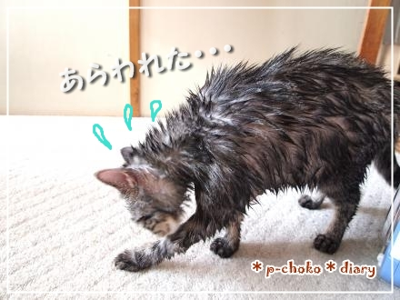 チョコたん入浴後
