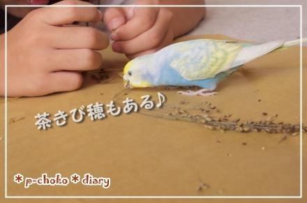 ピーちゃんも食べる~!