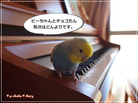 ピーちゃんピアノの上でどんより