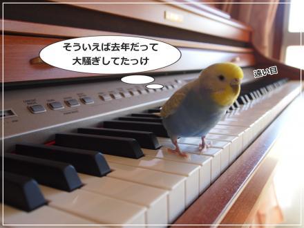 ピーちゃんピアノの上で遠い目