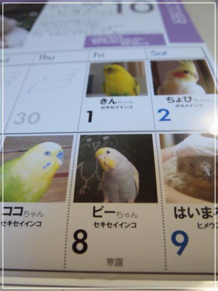 今年のカレンダーピーちゃん
