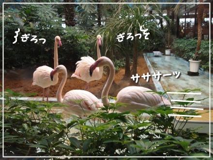 メヒコ(フラミンゴ4羽)