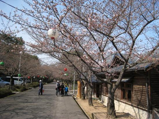 2010/03/22公渕森林公園桜1