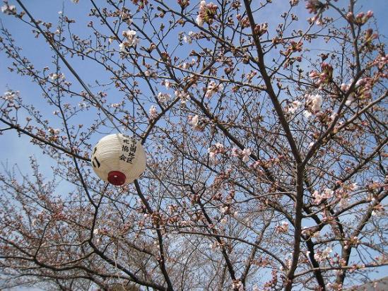 2010/03/22公渕森林公園桜2