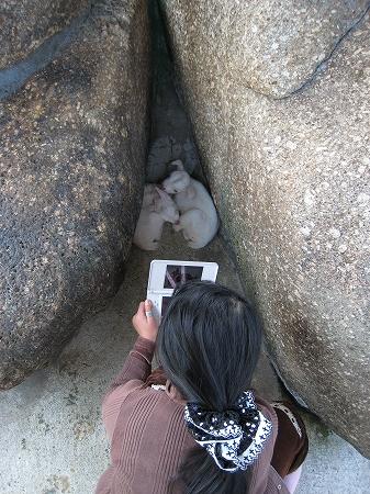 2010/04月/わんぱーくこうちアニマルランドヤギの赤ちゃん1
