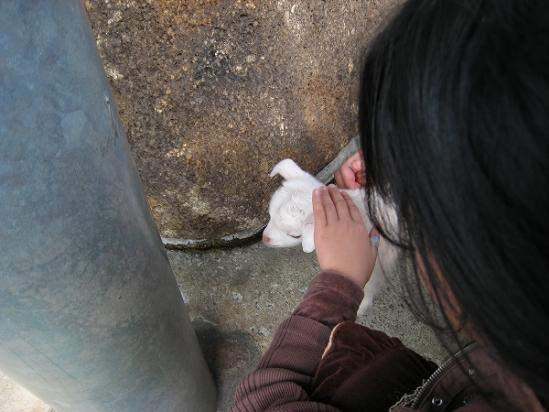 2010/04月/わんぱーくこうちアニマルランドヤギの赤ちゃん3
