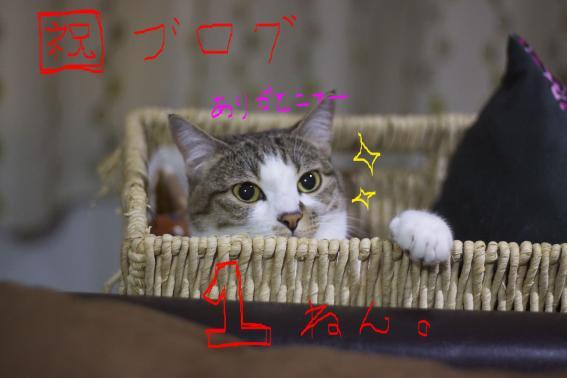 IMG_7951_convert_20110406000112.jpg