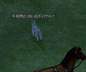 ブログ用千年白ダイアウルフ
