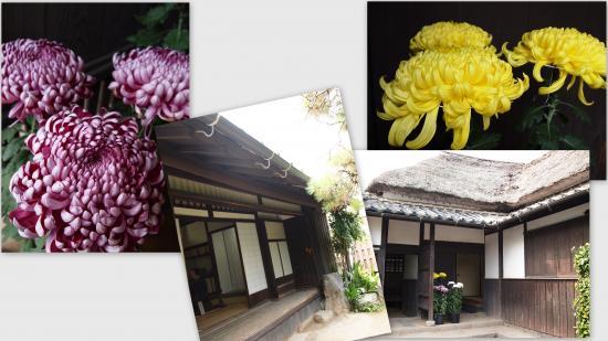 2010-11-082_convert_20101119021624.jpg