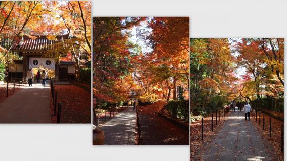 2010-12-028_convert_20101208135734.jpg