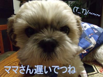 繝・ず繧ォ繝。+1151_convert_20100123010530
